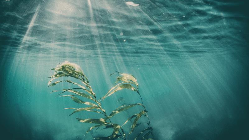 Morské riasy v kozmetike – ThalassoSPA