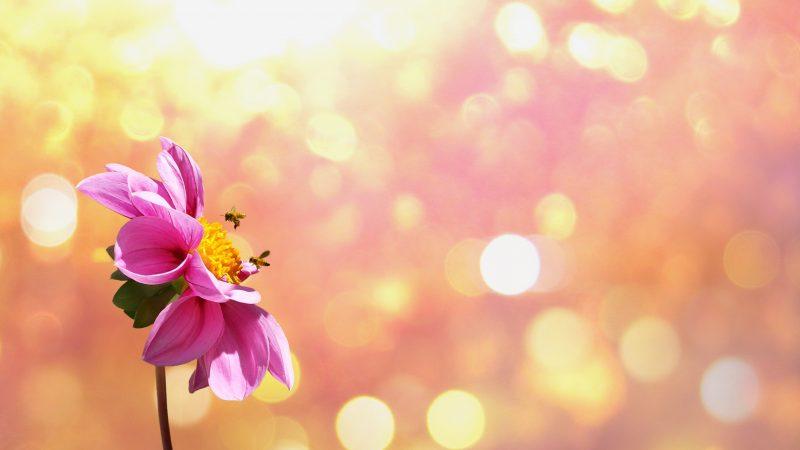Alergénová imunoterapia včelím a osím extraktom